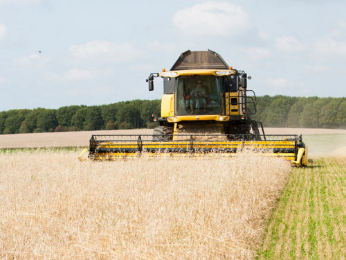 Combine Harvester cutting a crop in the fields